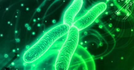 cromosoma_artifact